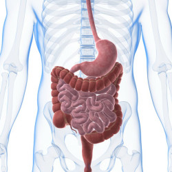 The Importance Of Digestive Enzymes